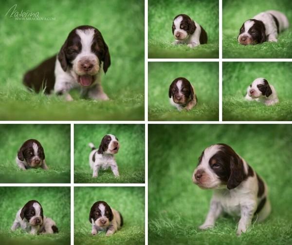 Puppies_15 days